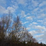 Winter sky in westernwashington on my walk this afternoon leaflesshellip
