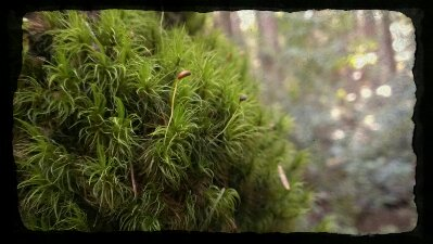 more moss in the wet northwest